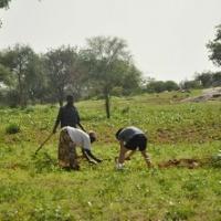 Uprawa roślin prowadzona jest tylko za pomocą najprostszych narzędzi